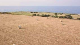 Jejua o tiro aéreo do campo de trigo que negligencia o litoral azul vídeos de arquivo