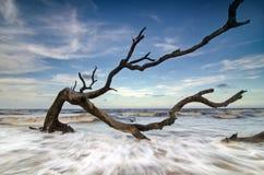 Jekyll wyspy Driftwood Obraz Royalty Free