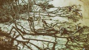 Jekylli海岛天线向下视图和漂流木头靠岸, Geor 库存照片