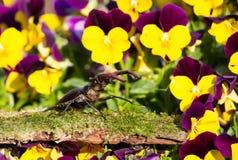 Jeleń ściga na mechatym drewnie wśród fiołka kwitnie w ogródzie zdjęcie stock