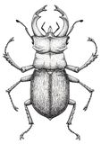 Jeleń ścigi tatuażu sztuka Lucanus cervus Kropki pracy tatuaż insekt Symbol władza, siła, władza i szlachectwo, Zdjęcia Royalty Free