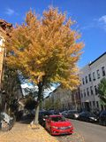 Jeleń ulica w jesieni, Brooklyn, Nowy Jork Obraz Stock