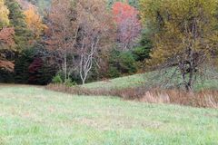 Jeleni karmienie w polu z Lasowym tłem Zdjęcie Royalty Free