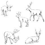 Jeleni nakreślenie Ołówkowy rysunek ręką Zdjęcie Royalty Free