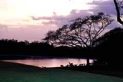 Jeleni nocy jezioro Hawaje Fotografia Stock