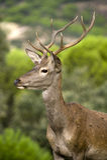 jeleni potomstwa obraz royalty free