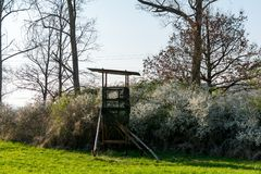 Jeleni stojak przed łąką w Naturalnej rezerwy schoenb Obrazy Stock