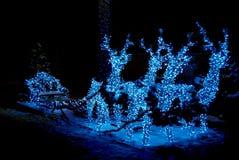 jelenie świąt Fotografia Royalty Free