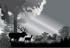 jelenie lasu grey sylwetki royalty ilustracja