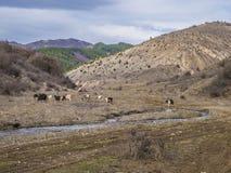 Jeliava village outdoors nearby hills and goats hard.