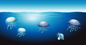 Jellies Royalty Free Stock Photo