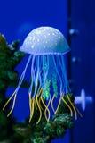 Jellifish我n水族馆 库存照片