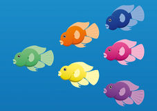 Jelly Bean Cichlids Royalty Free Stock Image