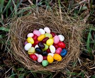 Jelly Bean Nest Royalty Free Stock Image