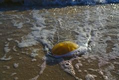 Jelly blob on beach sand. Washed by sea water stock photos