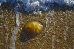 Jelly blob on beach sand. With sea water nearby stock images