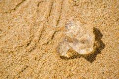 Jelly blobs on the sandy beach surface. A clear Jelly blobs on the sandy beach surface royalty free stock image