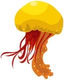 Jelly fish Stock Image