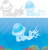 Jelly-fish Royalty Free Stock Images