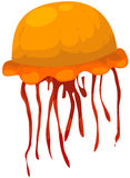 Jelly fish Royalty Free Stock Photo