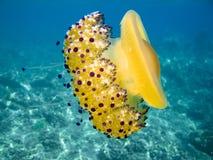 Jelly fish stock photo