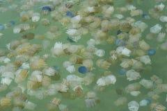 Jelly Fish Fotografía de archivo libre de regalías