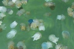 Jelly Fish Fotografía de archivo