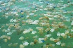 Jelly Fish. Beauty diving sea Royalty Free Stock Photos