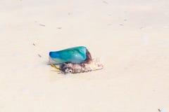 Jelly Fish caraibica Fotografia Stock Libera da Diritti