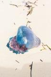 Jelly Fish des Caraïbes Images libres de droits