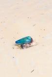 Jelly Fish des Caraïbes Photos stock