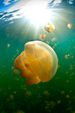 Jelly fish with light Royalty Free Stock Photography