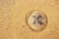 jelly fish on sand Stock Photos