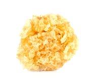 Jelly Fungus blanca en el fondo blanco Fotografía de archivo libre de regalías