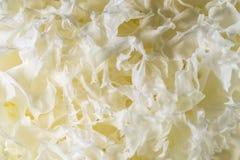 Jelly Fungus blanca secada Foto de archivo