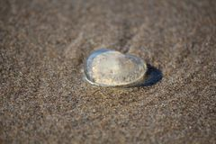 Jelly Heart by the Sea Stock Image