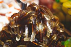 Jelly Sweets,worms, macro shot. Royalty Free Stock Images