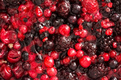 Jelly Topping With Berries stock images