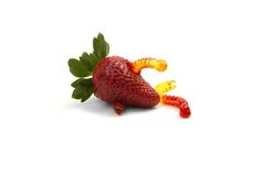 Jelly worm in strawberry Stock Photography