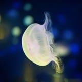 jellyfish υποβρύχια Στοκ φωτογραφία με δικαίωμα ελεύθερης χρήσης