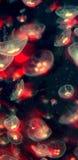 jellyfish Στοκ Φωτογραφίες