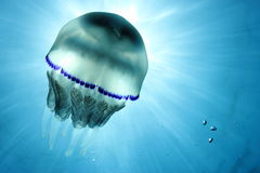 jellyfish Fotografia Stock