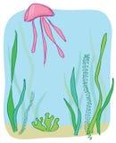 Jellyfish Royalty Free Stock Photos