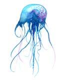 Jellyfish akwareli ilustracja Malująca meduza odizolowywająca na białym tle, podwodna przyroda Zdjęcie Stock