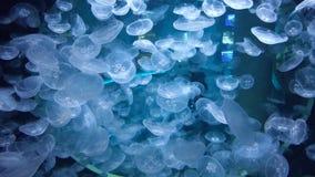 Jellyfish akwarium Zdjęcia Royalty Free