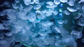 Jellyfish aquarium royalty free stock photos