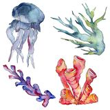 Jellyfish and aquatic underwater nature coral reef. Tropical plant sea isolated. Watercolor background illustration set. Jellyfish and aquatic underwater nature royalty free illustration