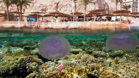 Jellyfish and the Beach. Split-shot of the reef and beach, Sharm el Sheikh, Egypt Royalty Free Stock Photo