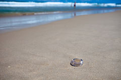 Jellyfish on the beach, Surfers Paradise Royalty Free Stock Photos