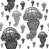 Jellyfish black and white seamless  pattern. Realistic engraved style of jellyfishes on white background Royalty Free Stock Images
